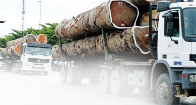 Abate indiscriminado de árvores afecta florestas nos municípios de Buco-Zau e Belize