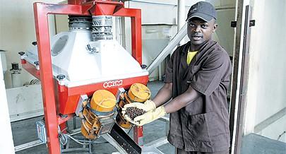 Produto angolano é exportado para Portugal e em brevechega à China