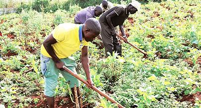 Num período  em que as chuvas já caem os camponeses empunham as suas ferramentas e entregam-se ao trabalho