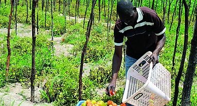 É preciso mais instrumentos agrícolas para incentivar os camponeses a aumentarem as lavouras