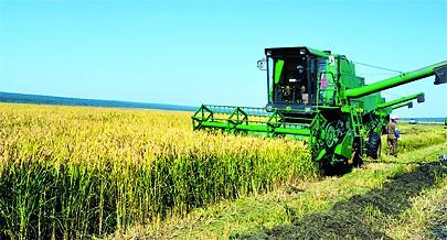 Emprego intensivo  de técnicas modernas no cultivo de arroz na Província do Moxico garante  óptimas colheitas para a segurança alimentar da  população da região e para  a exportação  para os mercados dos países vizinhos sobretudo a Zâmbia e RD Congo