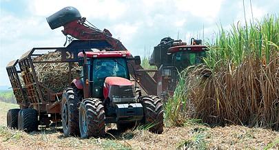 Com o aumento dos níveis de produção no projecto agro-industrial Biocom em Malanje a necessidade de importação de açúcar vai sofrer em breve forte redução