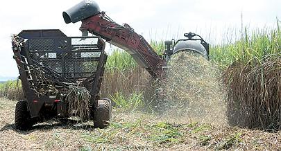 A produção do açúcar da Biocom nesta primeira fase é destinada ao mercado nacional e o etanol hidratado vai atender a indústria de bebidas