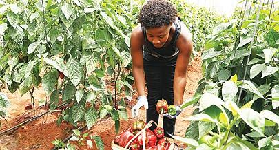 Toneladas de bens agrícolas produzidas em Quitexe
