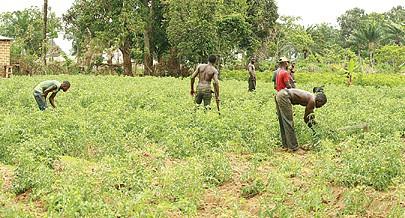 Terrenos do Vale do Yabi foram destinados por decreto presidencial para a agricultura mas estiveram  ilegalmente ocupado