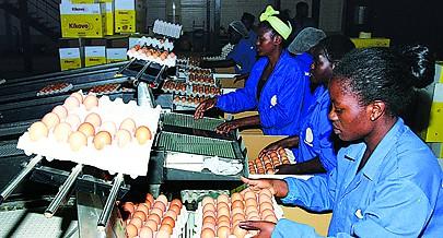 Fazenda Pérola do Kikuxi ostenta a principal marca de ovos de Angola e cobre 80 por cento do mercado nacional com um produto de reconhecida qualidade