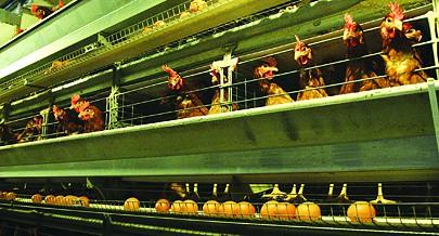 A fazenda Peróla do Kikuxi já ganhou o seu espaço no mercado nacional fornecendo os produtos às grandes superfícies comerciais do país