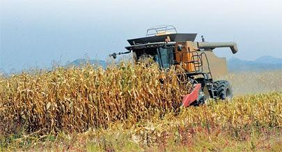Fazendeiros da região da Quibala estão apostados em produzir milho e soja