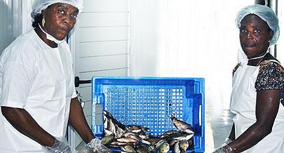 Sector das Pescas está à beira de atingir e em algumas áreas superar os objectivos traçados nos programas dirigidos