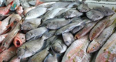 Quantidades de pescado capturadas nos primeiros dez meses do ano indicam que as metas estabelecidas nos programas dirigidos estão ao alcance do sector