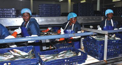 Processamento e transformação de  pescado nas mais diversas formas e o processo de comercialização envolvem  um número considerável de mulheres em todo o país