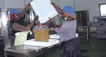 Fábrica de farinha e óleo de peixe garante aproveitamento racional dos resíduos de pescado