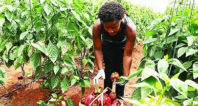 Com a exploração de fosfatos em Cabinda e Zaire o país deixa de importar fertilizantes