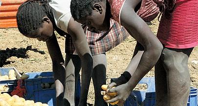 Agricultura feita em Angola é  predominantemente orgânica sem recurso a produtos químicos