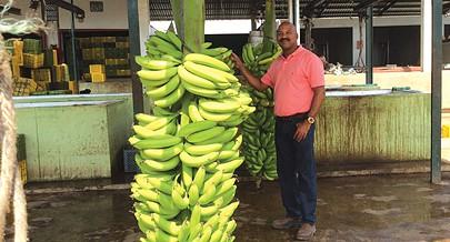 Agricultor Manuel Monteiro líder da produçao da banana em Benguela