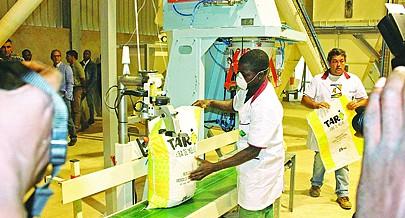 Para assegurar a produção a fazenda de Santo António tem à sua disposição uma fábrica de rações capaz de produzir milhares de toneladas por ano o que permite manter a exploração pecuária