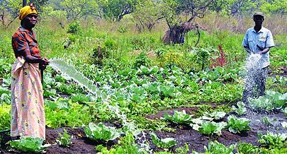 Além do Turismo o sector da Agricultura é uma área que também contribui para o desenvolvimento regional através da diversidade da economia