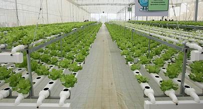 Pólo agrícola que usa a técnica da hidroponia num exemplo de empreendedorismo e inovação numa altura em que o país tem na primeira linha de prioridades o aumento da produção interna e a diminuição gradual das importações