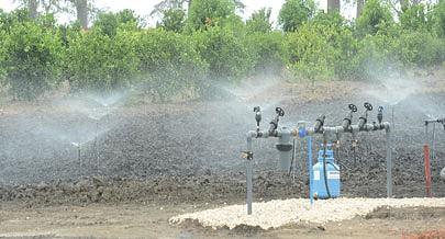Fazendas têm sistema de irrigação que permite produzir em todas as estações do ano
