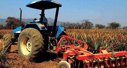 Primeiras empresas agricólas já trabalham no Pólo Agrícola da Quiminha