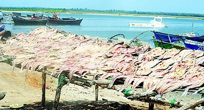Uma parte do pescado capturado é transformado em  seco para garantir maior tempo de conservação do produto