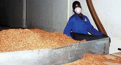 A produção da matéria-prima na Matala tem dado colheitas suficientes para fabricação do tabaco em abundância