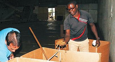 Vitorino Jay um dos supervisores da empresa demonstra a qualidade dos produtos