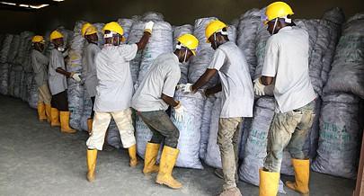 Jovens ensacam parte da produção para ser comercializada no mercado nacional