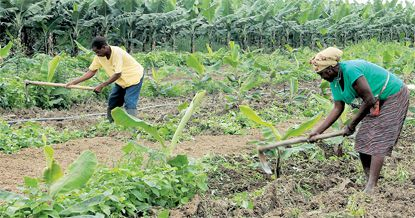Um dos grandes objectivos do Executivo é fazer da mecanização a regra na preparação dos solos para o cultivo e reduzir a incidência de meios como enxadas e catanas  na produção agrícola
