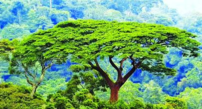 Estudos mostram que a flora corre menos riscos comparativamente à fauna