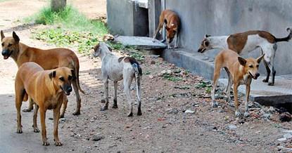 O programa de recolha de animais vadios  na cidade de Mbanza Kongo  e em outros municípios da província carece de material como açaimos e pistolas munidas com argolas como tranquilizantes e redes