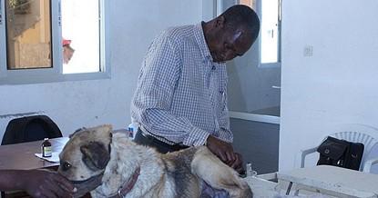 Condições financeiras estão na base da não  realização de uma campanha de vacinação anti-rábica animal porta-a-porta