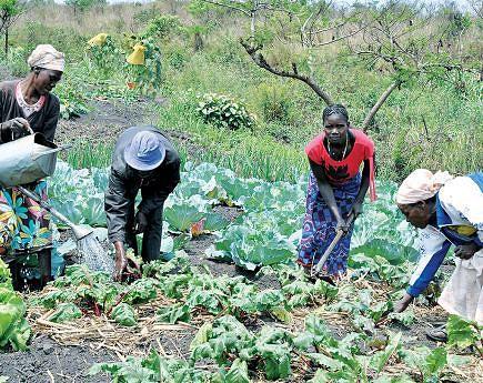 Vários projectos estão em andamento com destaque para a intensificação da produção agrícola promovendo o crescimento económico