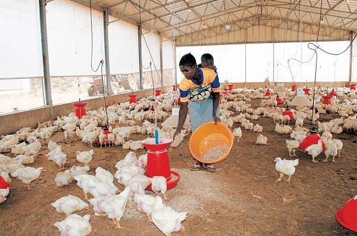Partido no poder vai relançar a investigação agrária no país com o propósito  de melhorar a produtividade pecuária bem como verificar e dinamizar as culturas industriais