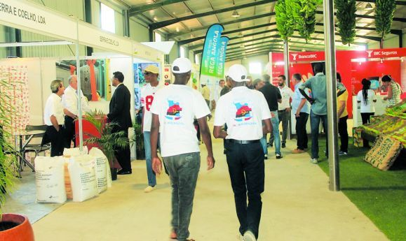 A feira da banana de produção nacional foi um espaço privilegiado para o contacto entre produtores e expositores que apostam na diversificação da economia do país