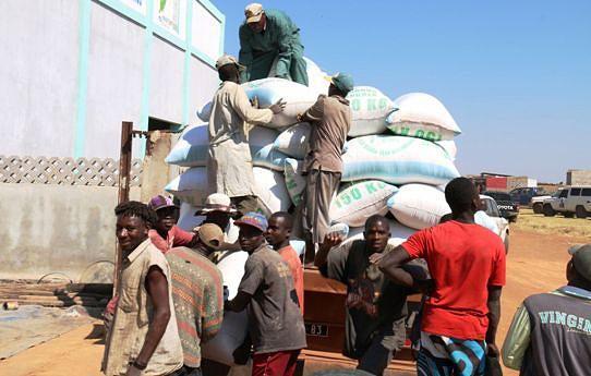 Muitos jovens encontraram emprego no armazém de compra de milho enquanto outros trabalham as terras férteis de Quipungo