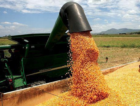 As provisões colocam o país em condições de aspirar nos próximos anos a uma safra de cerca  de seis milhões de toneladas de milho