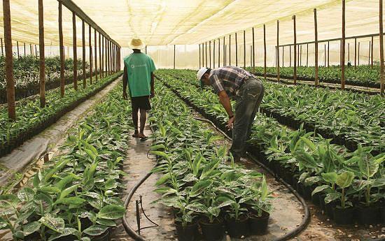 Na altura não foi possível trabalhar no sector agrícola devido à guerra