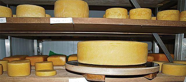 A empresa produz cerca de 300 quilos de queijo por dia