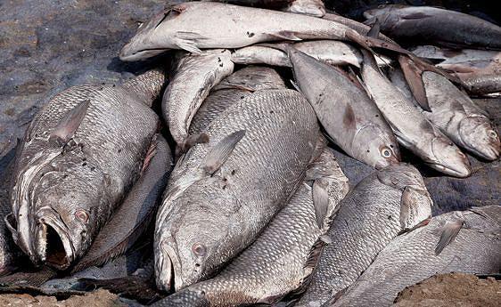 As autoridades provinciais mantêm incentivos a pescadores artesanais