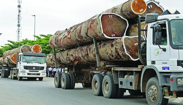 Governo proibiu a exportação de madeira em toro e o sector industrial ganhou um novo fólego com o surgimento de novas fábricas