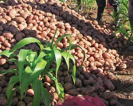 Camponeses têm sido os principais beneficiários dos  projectos