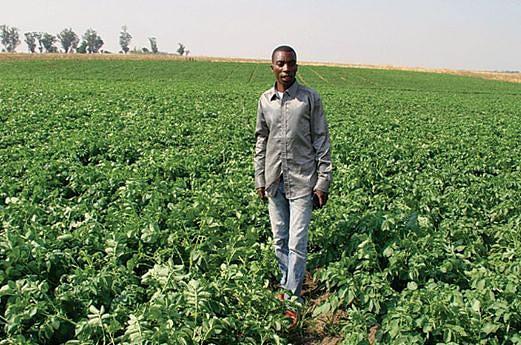 Incentivos à produção local encorajam a produção agrícola
