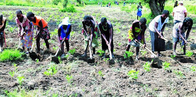 A produção agrícola aumentou com a entrega de materiais para o cultivo do campo aos camponeses