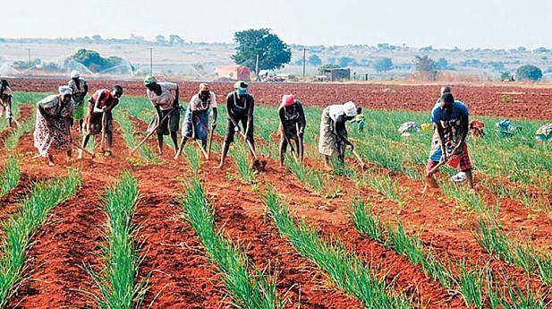 O perímetro irrigado da Matala possui condições adequadas para a produção  de arroz