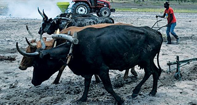 Camponeses beneficiaram de materiais de cultivo para expandir a agricultura