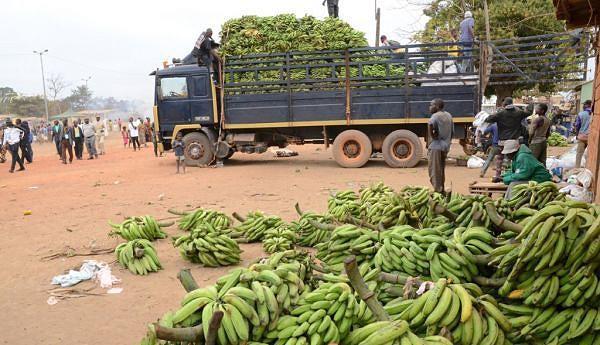 Entre os produtos do campo a banana é a que tem mais destaque