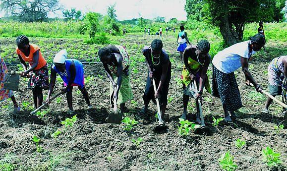 Melhorar e aumentar a produção com apoio às famílias camponesas