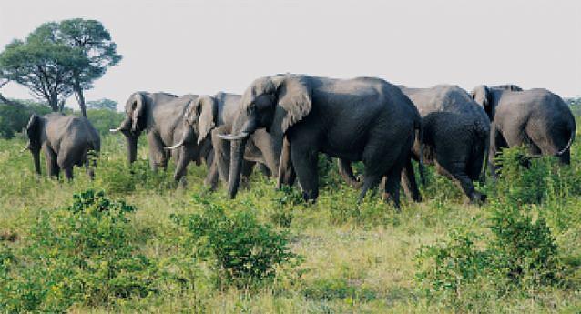 Os parques nacionais de Mavinga e Luengue-Luiana ajudam na preservação da biodiversidade