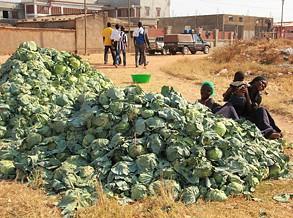 Dificuldades no escoamento estragam 21 toneladas de repolho e cenoura na Calenga
